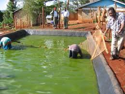 fish farming new with animal welfare information infonet