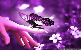 images of flowers and butterflies bioinformatics r u0026d