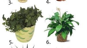 plant low light plants wonderful common indoor house plants 10