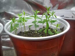 plants that don t need sunlight to grow casa mariposa 03 01 2014 04 01 2014