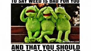 Frog Memes - kermit the frog weed memes weed memes