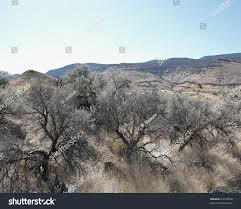 sage brush high desert landscape mountain stock photo 44778538