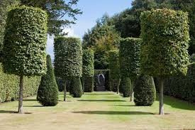Types Of Garden Trees Anne Roberts Gardenschicago Landscaping Consider These Types Of