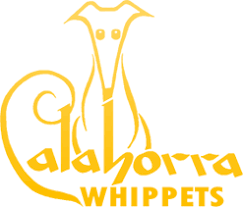 afghan hound breeders qld frozen and artificial insemination calahorra afghan hounds