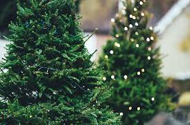 Natural Christmas Tree For Sale - where to buy real christmas trees in perth perth the urban list