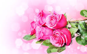 roses flowers pictures of roses flowers wallpapers adorable 41 roses flowers