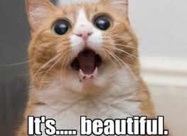 Angry Meme Cat - angry cat meme pics mne vse pohuj