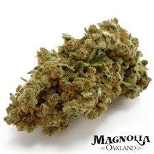 cannabis basics u2014 magnolia oakland