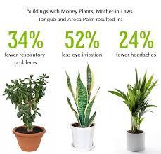 best plants for bedroom the best indoor plants best 25 best plants for bedroom ideas on