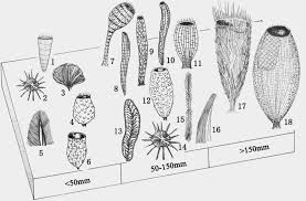the dragon u0027s tales where what sponges lived during the cambrian