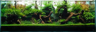 Artificial Tree For Home Decor by Home Accessories An Aquascape Designs Of Highlight And Shadow