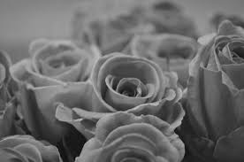 rose black and white free stock photo public domain pictures
