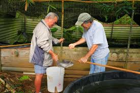 Backyard Fish Farming Tilapia Nature And Farming How To Raise Tilapia In The Backyard