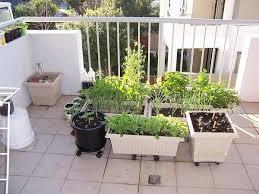 variety pot balcony garden ideas vegetables 510 hostelgarden net