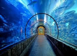 bureau vall馥 boulogne sur mer bureau vall馥 boulogne sur mer 36 images aquarium sea tarif 28