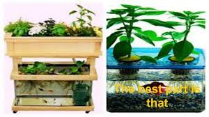 indoor aquaponics systems diy guide for beginners youtube