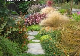 156 best yard ornamental plants images on ornamental