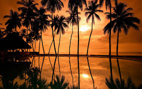 Pom Trees Palm Trees Beach Wallpapers Group 84