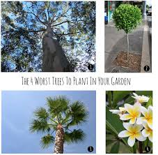 the four worst trees to plant in your garden seed landscape design