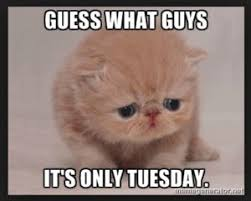 Tuesday Funny Memes - amazing tuesday morning funny quotes images