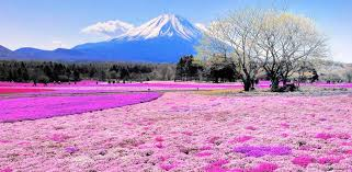 flower places 10 of the most colorful places on earth travel purewow national