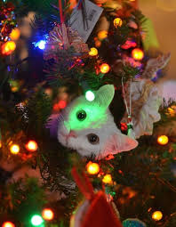 how to keep cats out of tree decor
