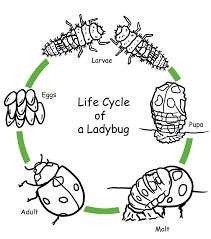 ladybugs bite surprising answer infinite spider