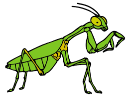cute little insect coloring pages