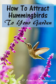 how to attract birds archives fresh gardening ideas