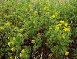 yellow marigold flowers in the garden yellow flowers for your