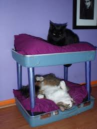 Cat Bunk Bed Reclaimed Suitcase Chair Cat Bunkbed How To Make A Pet Bed