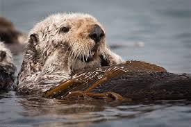 California Wildlife images Watching wildlife along california 39 s coast jpg
