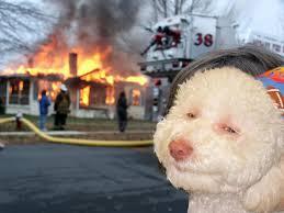 Birthday Dog Meme - epic birthday dog meme kerrydean com