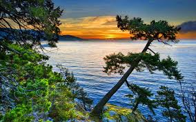 lake sunset pine tree wallpaper hd 94537 wallpapers13 com