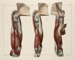 Human Anatomy Reference 273 Best Anatomy Images On Pinterest Human Anatomy Anatomy