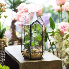 compare prices on succulent garden indoor online shopping buy low