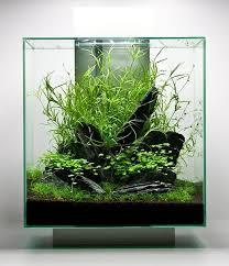 nano aquascape nano aquascape aquascape project
