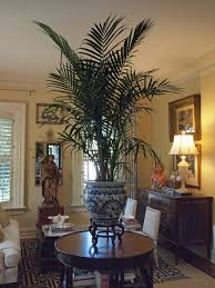 British Colonial Home Decor by Very Taken By The British Colonial Flavor The Palm Gives This Room