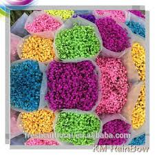 Baby S Breath Wholesale Export Excellent Quality Fresh Preserved New Product Wedding Babys