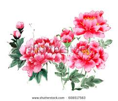 Peony Flowers by Traditional Ancient Chinese Hand Painted Peony Stock Illustration