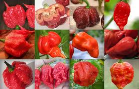 top 12 peppers in the world 2017 cayenne diane