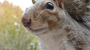 5x5 randi the backyard squirrel on vimeo