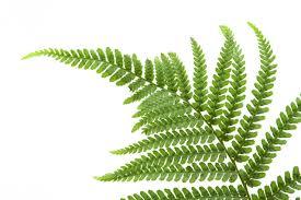 fern leaf wallpaper 4247458 2550x1698 all for desktop