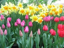 gardening tips newsnish