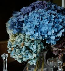 Dried Hydrangeas Love Like Crazy Dried Hydrangeas