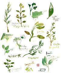 les herbes aromatiques en cuisine herb print watercolor herbs kitchen print botanical poster