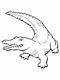 crocodile drawings for kids coloring home