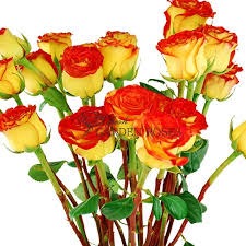 wholesale roses wholesale bicolor yellow roses circus roses from