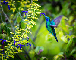 the 3 rules to follow to attract hummingbirds