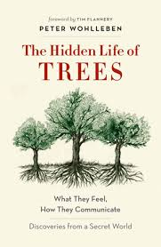 ls that look like trees book review the hidden life of trees the listener